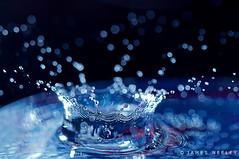 Splash! (James Neeley) Tags: water waterdrop splash highspeedphotography flickr8 mywinners highspeedflashphotography karmanominated jamesneeley eisf2009