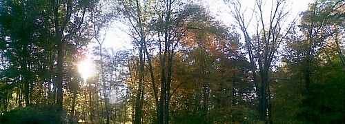 Fall Afternoon Trees Panorama