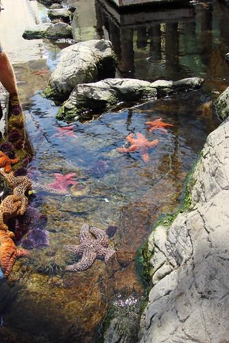 Cabrillo Marine Aquarium. cabrillo tidepool middot; cabrillo marine aquarium
