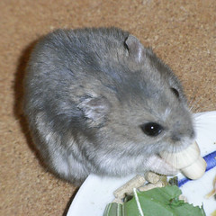 ちびっこクロワッサンを食べるコー太