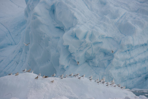 Icebergs near the mouth of Ilulissat Kangia