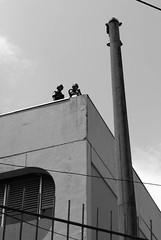 Eleies 2008 / Primeiro Turno - RJ (AF Rodrigues) Tags: brasil riodejaneiro rj periferia favela adriano soldado eleio mar segurana voto comunidade votar exrcito ferreira ocupao ciep afrodrigues espaopopular brizolo