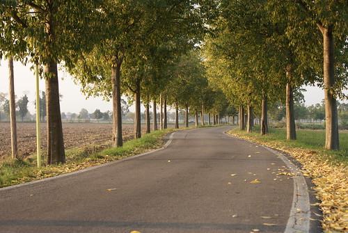 Strada di campagna, in autunno