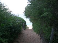 Track 2 (cobalt.penguin) Tags: beach dunes sydney peninsula avalon barranjoey