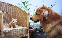 """Carlos passt auf Tiger auf ,  094 (roba66) Tags: dog cute animal animals cat tiere tiger hund katze liebe tier platinumphoto flickraward"""" vanagram saariysqualitypictures"""