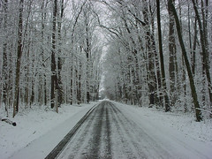 Templotrees (BorgRules) Tags: road trees winter white snow black colour tracks thechallengegame challengegamewinner
