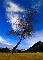 lone, twisted tree (-12C) Tags: travel tree landscape colorado rockymountainnationalpark d90 tokina1116mmf28