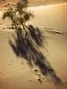 lonely tree (Alieh) Tags: sunset shadow persian sand alone desert iran persia solo lonely iranian ایران esfahan isfahan اصفهان درخت ایرانی aliehs alieh ایرانیان پرشیا کویر عالیه اصفهانی سعادتپور iranmapcom