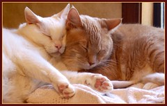 Sweet Snuggle Bunnies (Gail S) Tags: cats pinky catnap picnik thepuss catsandwindows bestofcats excellentcatshots