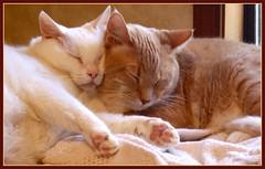Sweet Snuggle Bunnies (Gail S) Tags: cats pinky catnap picnik thepuss catsandwindows bestofcats excellentcatshots