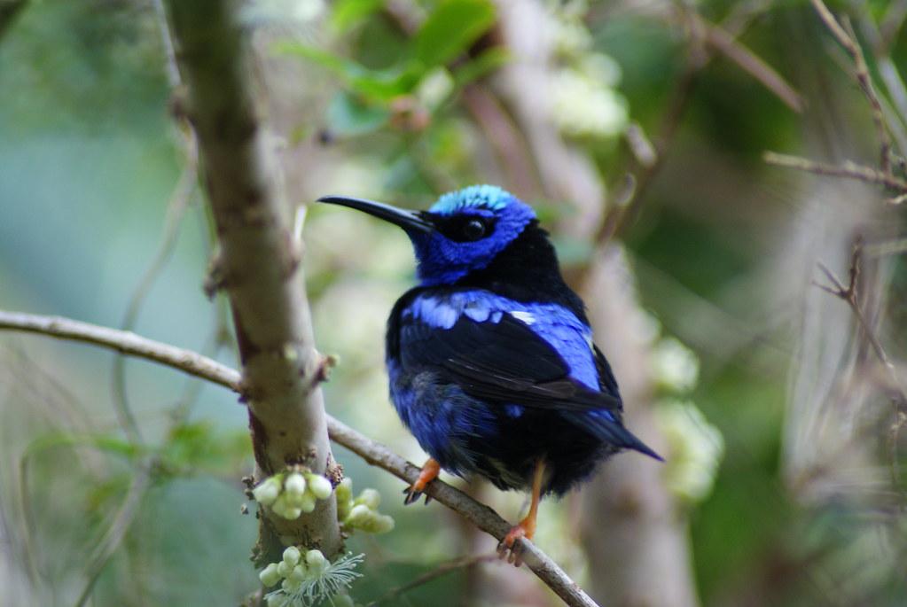 DSC09755: Blue Bird...