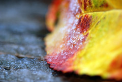 N O . S U G A R (Miss K.B.) Tags: autumn light snow macro fall ice nature colors ilovenature leaf dof bokeh details naturallight frosty simplicity micro nikkor simple minimalistic balkony storypeople 105mm 105mmf28gvrmicro nikond80