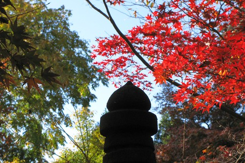Autumn / 秋(あき)
