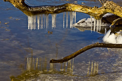I Should Have Left My Speedo Home (Bill Adams) Tags: maryland icicles abingdon harfordcounty canonef70200mmf28lisusm otterpointcreek