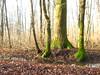 bosco umido