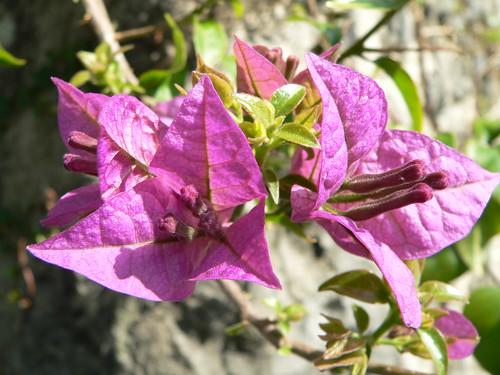 Japanische Flora