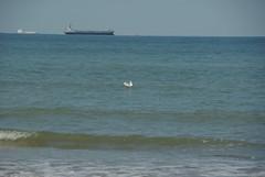 We both float (Lil Shepherd) Tags: beach birds gulls ships shore botanybay thanet
