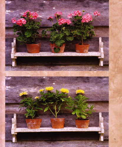 WindowBoxes_0006
