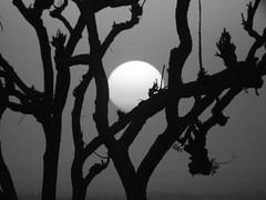 Moonrise or sunset? (PanilBrune) Tags: sunset blackandwhite sun moon india lune soleil moonrise leverdelune soleilcouchant