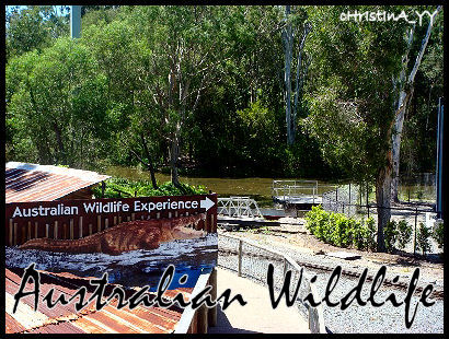Australian Wildlife Experience