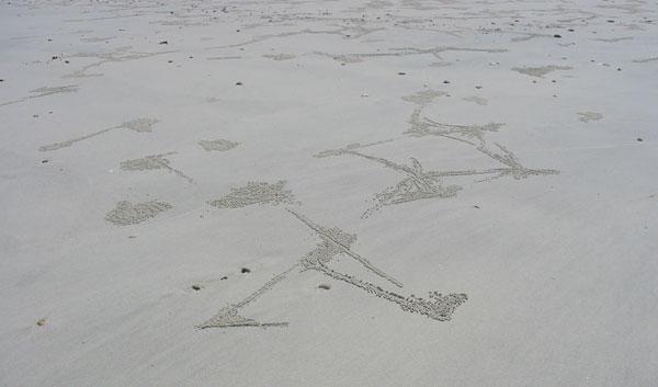 Крабовые узоры на местном пляже