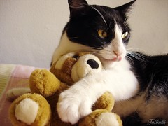 My Teddy (Kitty & Kal-El) Tags: pet cat feline teddy kitty tuxedo gato gata felino tuxedocat lindinha gordinha gorduchilda