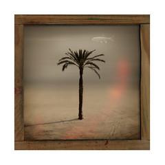 barceloneta (karto gimeno) Tags: summer palm palmera barna labarceloneta multimegashot lugaresenlosquesheestado kartogimeno
