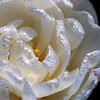 a gentle good morning.... (janoid) Tags: flowers beautiful onwhite xoxoxo andfriends xoxoxox ♥♥♥♥ janslightstyle janalicious janoidmagic janoidstyle tttttttttttttttttttt thesweetestlightever xo4u morningincapemay kissedbythemorningdew iseeaheartinthecenter