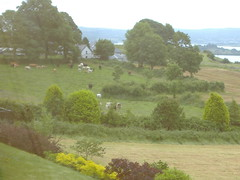 Ireland_0503.jpg (Starman9x) Tags: ireland florafauna scenicview