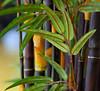 Indoor jungle (gwilmore) Tags: plant color d50 dof indoor afnikkor85mmf18d interestingness162 i500 fredastairestudio explore10jul08