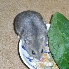 乾燥パパイヤを食べるコー太