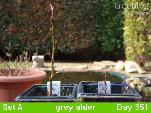 grey alders 4 and 3