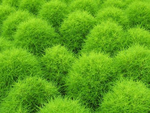 Green / 緑(みどり)