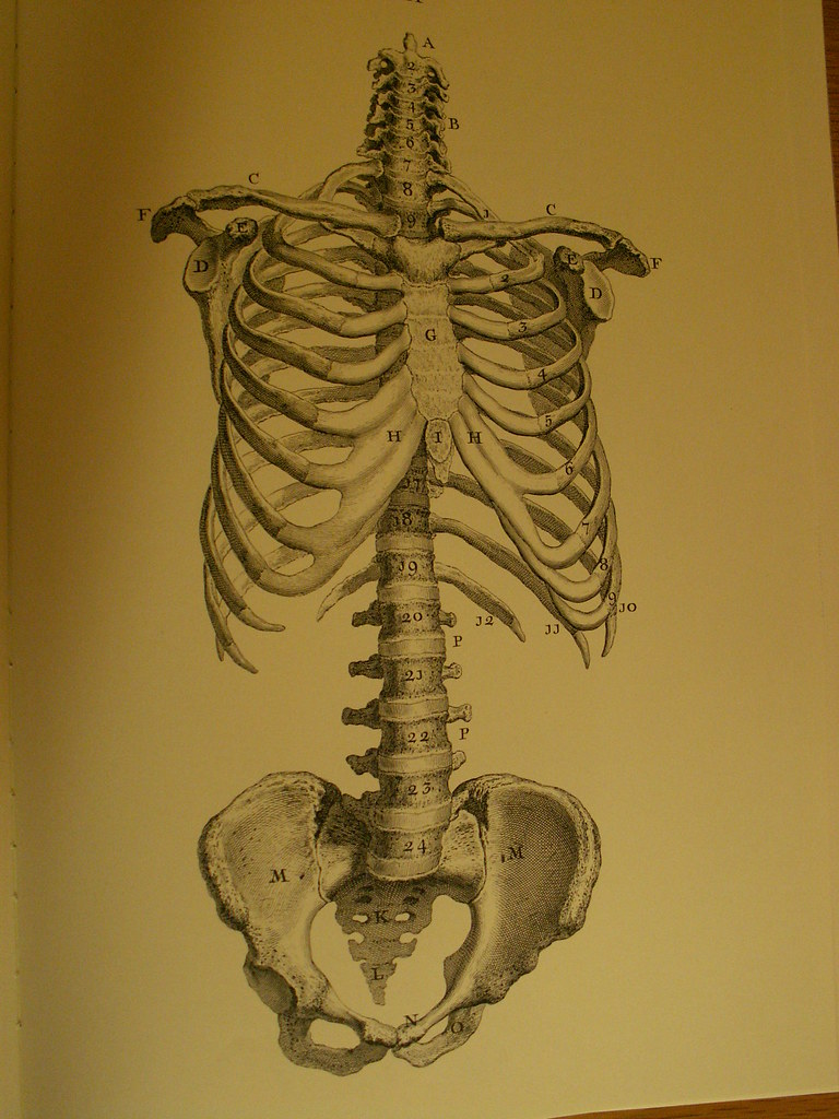 The Worlds Best Photos Of Anatomy And Umich Flickr Hive Mind