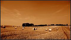 Many rolls (PerfectPicHunter (Germany)) Tags: nature sepia wow germany landscape deutschland lumix natur felder pointofview fields rolls landschaften mecklenburg mecklenburgvorpommern schwerin norddeutschland leicalens flickrsbest gunnars ourplanet flickrphotoaward perfectpichunter coolgermany landscapesofvillagesandfields spiritofphotography photorater e2image deutschlandfotos e2image