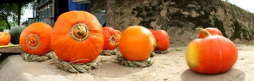 Pumpkins for sale (0.10 Euro/kg) on roadside near Chingning, Gansu Province, China