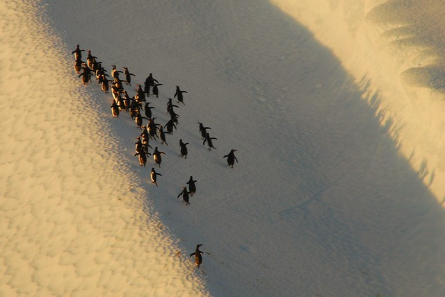 penguin trek