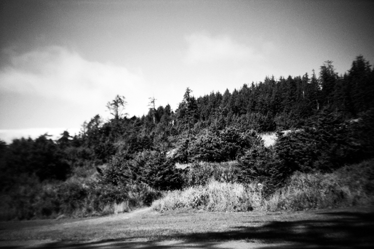 el_234 trees in oregon