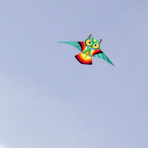 Bright Owl Kite
