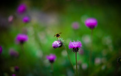 Bee Away (Korso87) Tags: fotografinewitaliangeneration