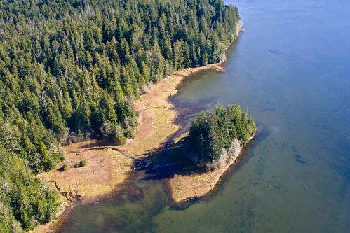 Encore des arbres au bord de l'eau