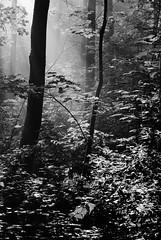 Morning2 (mzappafreak) Tags: bw germany deutschland nikon tripod hannover schwarzweiss d60 niedersachsen capturenx