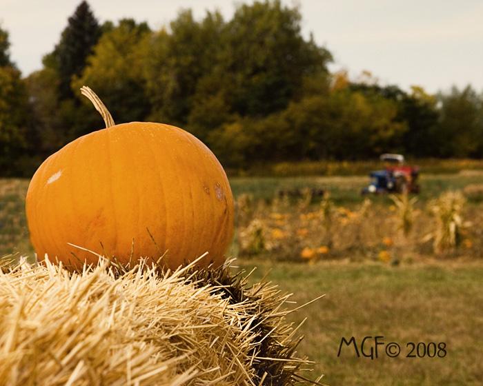 Pumpkin a