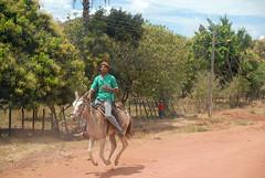 Buriti Bravo/MA (Rato Diniz) Tags: brasil ma costume br interior burro estrada jumento homem pista nordeste maranhao trabalhador cavalgar cidadepequena pequenacidade tradiao jumentinho buritibravo