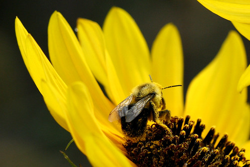 Natural Born Pollinator