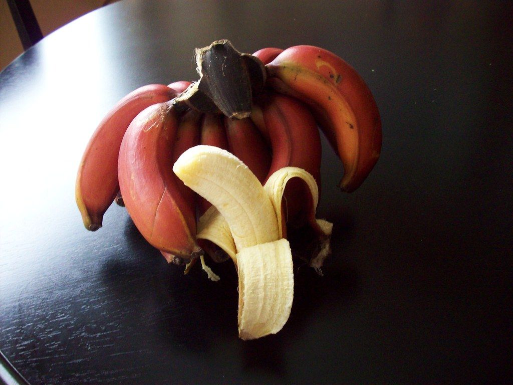 I Like Plants Jamaican Red Banana Harvest