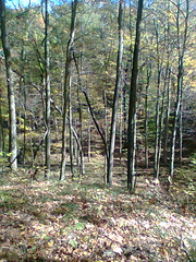 Brown County State Park (crabnyell) Tags: nashville indiana browncounty