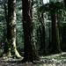 en Parque Nacional Huerquehue // near Pucon, Chile