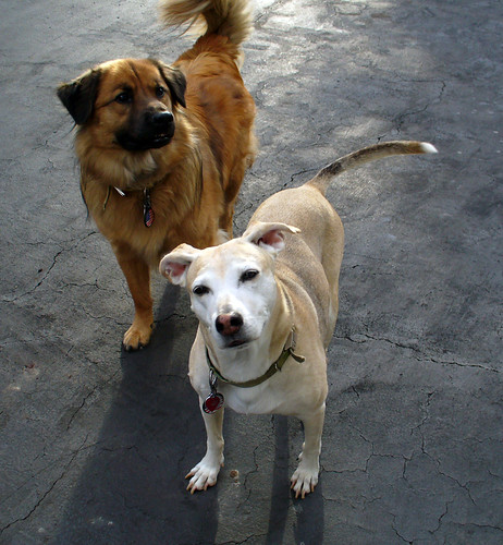 2006-09-25 - Dogs-0155