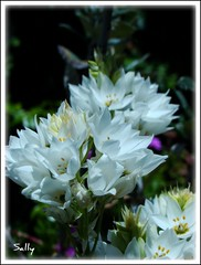 For my mother... (sallysue007) Tags: white nature mom rayer